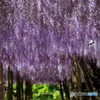 Corridor of Purple
