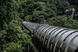 緑を横切る導水管