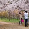 スマホで桜の記念写真