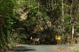 車通りの少ない林道でのんびり