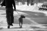 いつもの散歩道