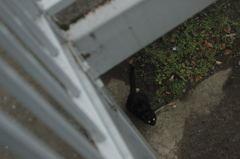 近所の黒猫ちゃん。