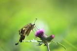花と蝶14