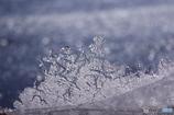 氷のティアラ