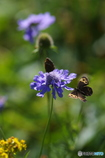 花と蝶27