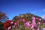 花と紅葉の妙義山