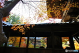 秋の切取り1