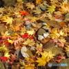 落ち葉の賑わい