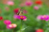 花と蝶25