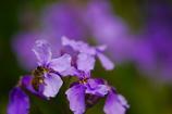 花とミツバチ3