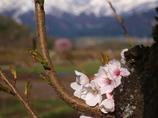 春の訪れ2