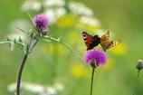 花と蝶15