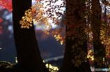 古刹の秋4
