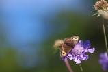 花と蝶26