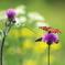 花と蝶13