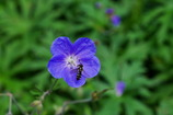 花のささやき