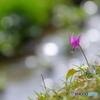 花は野のまま2