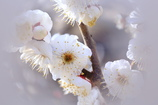 春の足音②