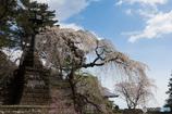 春の妙義神社