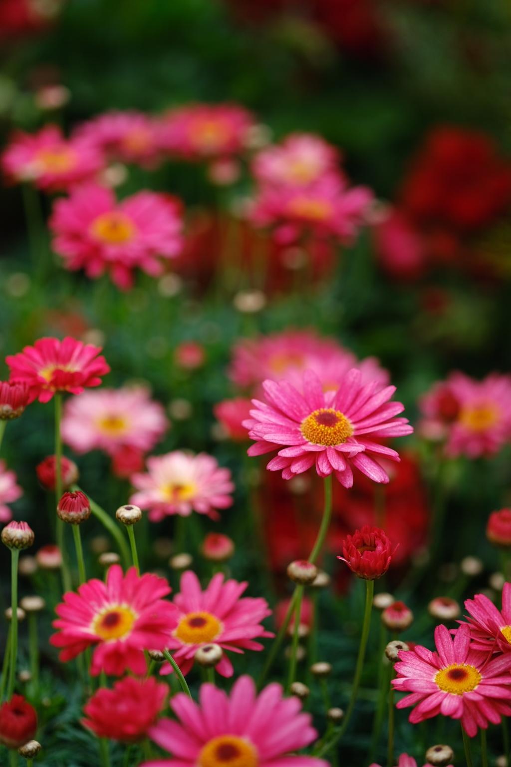 春花の画像 p1_33