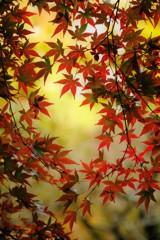 秋色に染めて