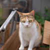 とあるカフェの猫たち4