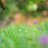 _spring ephemerals