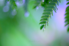_rain