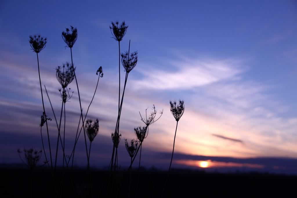 秋枯れ照らす夕陽