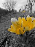 春なyellow