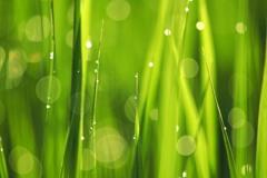 緑輝く 3