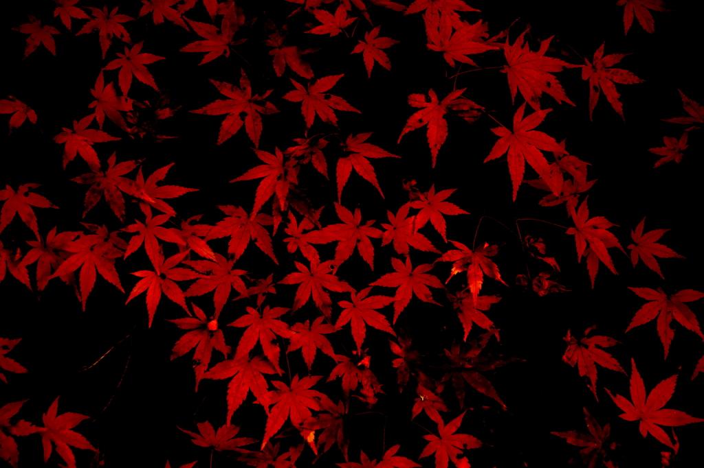 妖艶なる紅葉