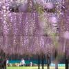 春さんぽ♪