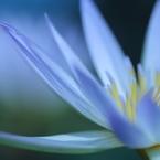 CANON Canon EOS Kiss X7で撮影した(Moonlight Serenade)の写真(画像)