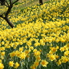 黄色でWelcome