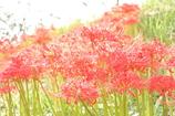 天上に咲く紅い花