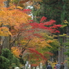 晩秋の紅葉狩り