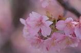 春がきた~♪