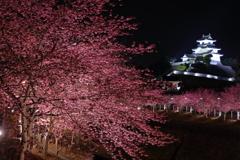 城下の夜桜