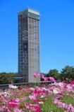 展望塔とコスモス