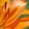 花弁の表情