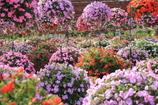 天空の花畑