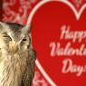 CANON Canon EOS Kiss X7で撮影した(Happy Valentine's Day!)の写真(画像)