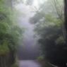 朝霧の中で...2