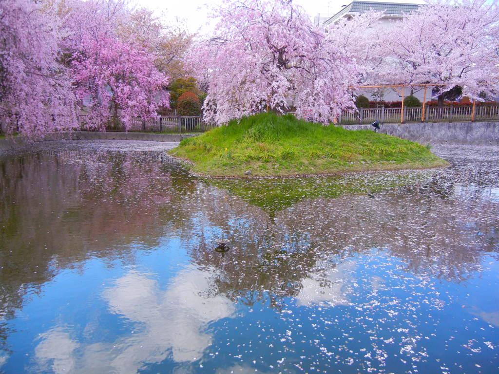 桜と水面に映る空の景色 by 朱雀...