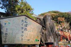 鶴岡八幡宮Ⅱ