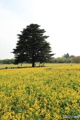 昭和記念公園②