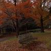 秋の想い出