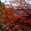 紅・燃ゆる庭園