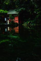 静岡浅間大社散策~湧玉池~